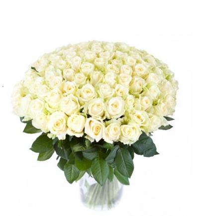 """Baltos Rožės """"Šimtukas""""  109€/149€/179€"""