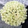 """Baltos Rožės """"Šimtukas""""  99€/119€/129€ 0"""