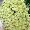 """Baltos Rožės """"Šimtukas""""  99€/119€/129€ 1"""