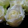 Baltos rožės 1