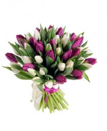 Baltos- Violetines MIX (49vnt)