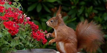 Paprasti, bet efektyvūs sprendimai: kaip skintas gėles vandenyje išlaikyti ilgiau?