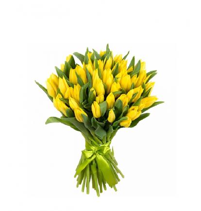 Geltonos tulpės (49vnt)
