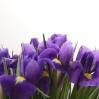 Irisai 0