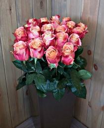 Margaspalvės rožės