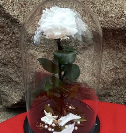 Mieganti Rožė (Balta)