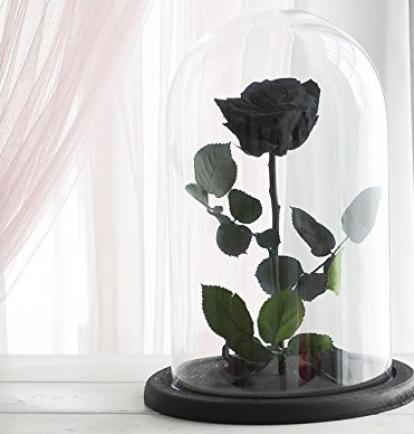 Mieganti Rožė (Juoda)