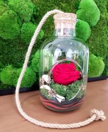 "Mieganti rožė  ""Kaja"""