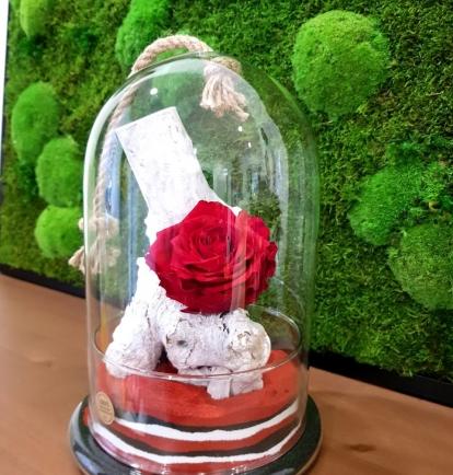 """Mieganti rožė """"Paulini"""""""