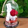 """Mieganti rožė """"Paulini"""" 0"""