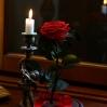 Mieganti Rožė - raudona 3
