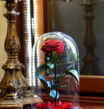 Mieganti Rožė - raudona