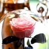 Mieganti Rožė - rožinė 1