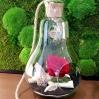 """Mieganti rožė stikle - """"Liepa"""" 1"""