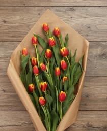 Margos  Tulpės