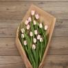 Paprastosios Tulpės 3