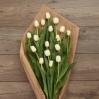 Paprastosios Tulpės 2