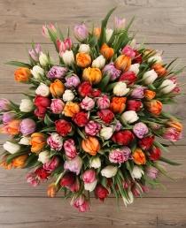 Pilnavidurės tulpės