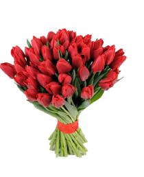 Raudonos tulpės (49vnt)