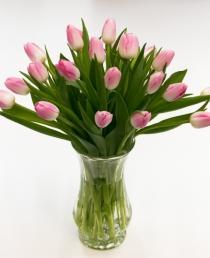Rožinės tulpės