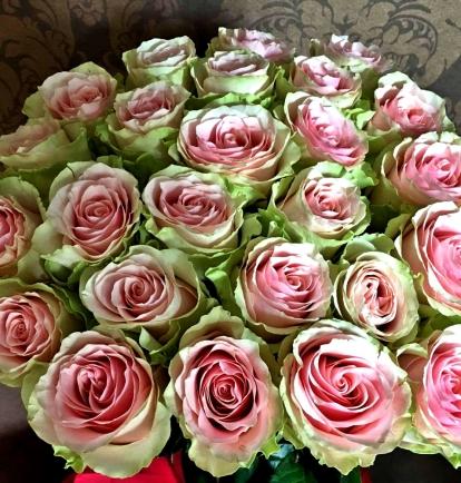 Salotinės Rožės