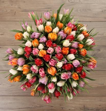 Tulpių fiesta ( 55vnt. )