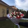 """Puokštė tulpių 51vnt                                           """"Solėja"""" 0"""