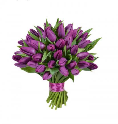 Violetinės tulpės (49)