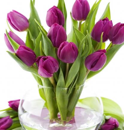 Violetinės tulpės
